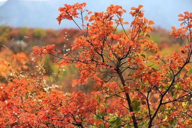 """印象秋天,走进万仙山可赏秋色美景,还可观""""岩壁芭蕾""""......"""