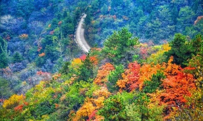 新乡南太行|走进11月,把你带进红色的海洋......