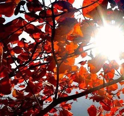 带一封秋的请柬,赴一次新乡南太行秋的盛宴......