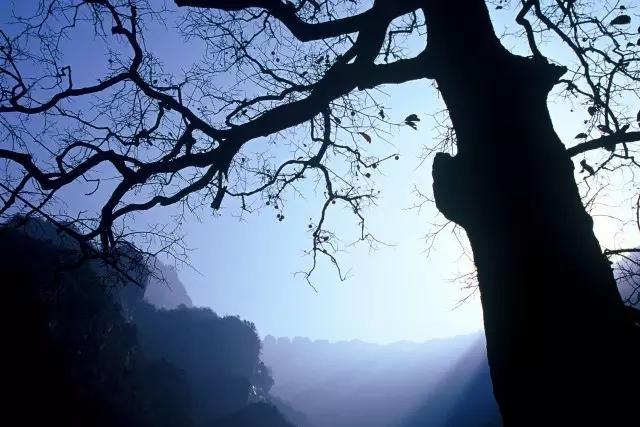 冬日物语|傲而不娇 仙而不妖 才是冬日里不一样的八里沟......