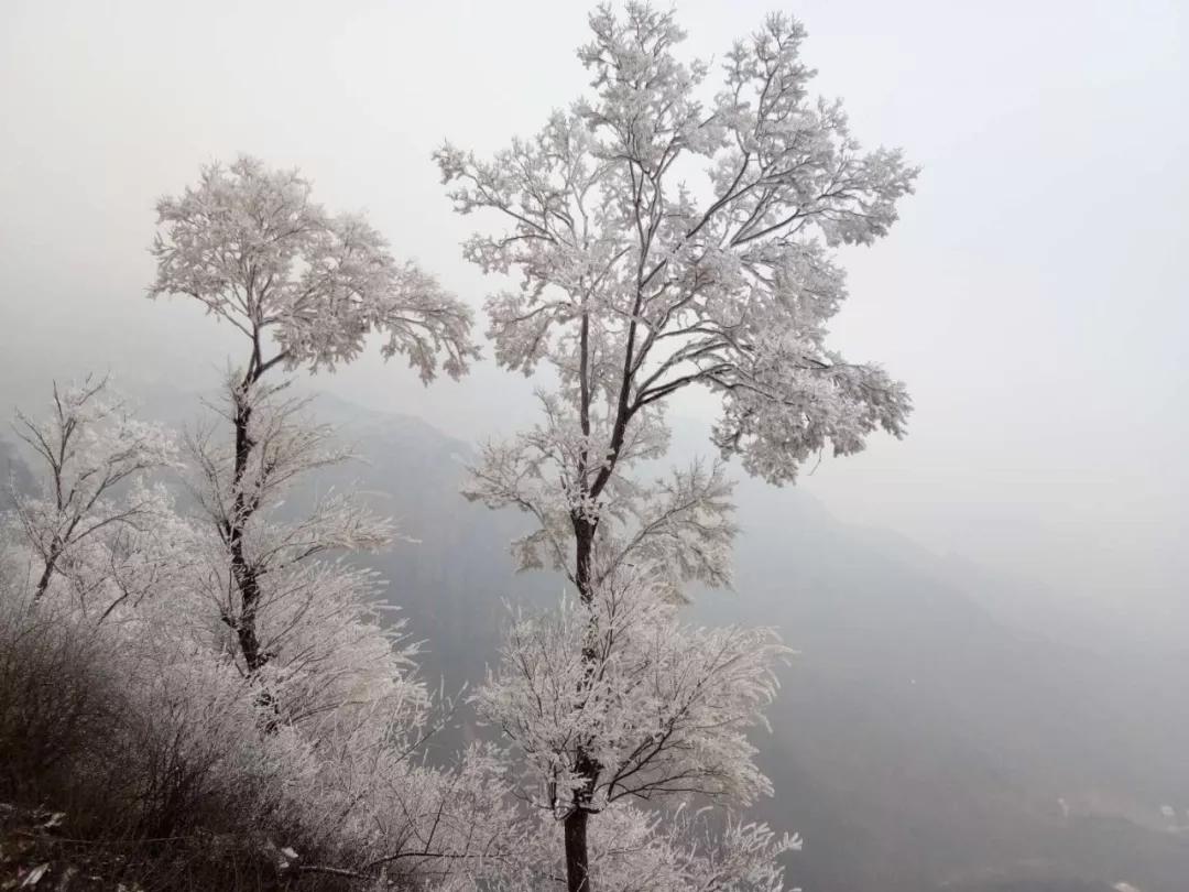 新乡南太行|莫道冬日凋零,冬日自有风情