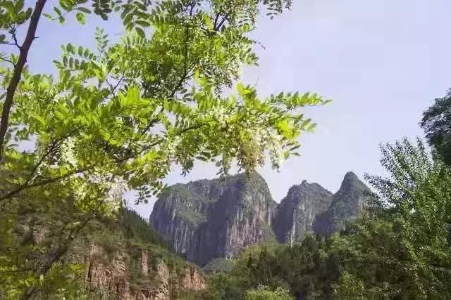 【 植树节】万仙山植树的故事——五峰山万亩松林
