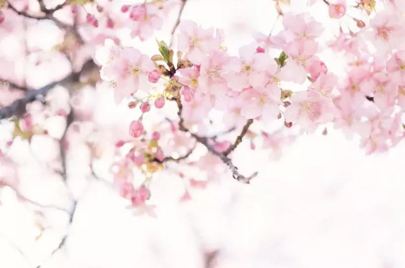 春游踏青哪里去?去关山看连翘,到秋沟赏桃花...