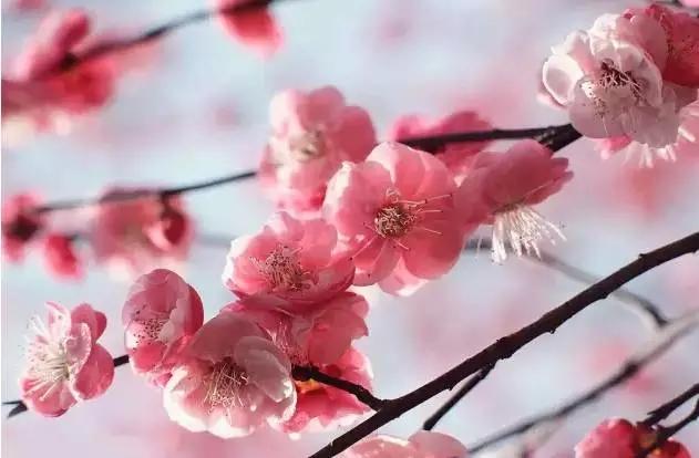 【春花·舞太行】春风十里,去看那花花世界,让你独享春色...
