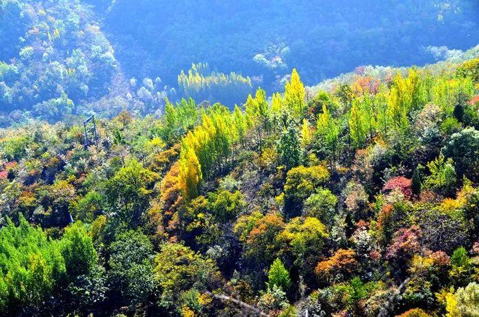 秋分|新乡南太行彩林秋色最佳观赏季就要到啦!约起来!