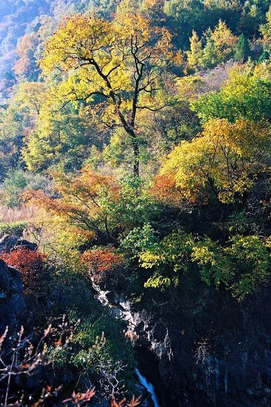 来新乡南太行,邂逅浪漫唯美的多彩之秋!
