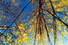 阳光大好,秋色正浓,快来新乡南太行赴深秋之约...