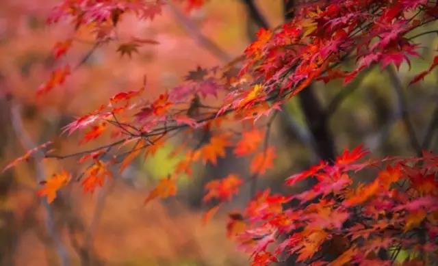 秋天的秋沟,等你来打卡哟!
