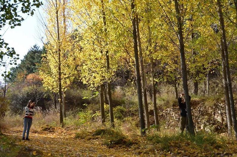 新乡南太行丨收藏一片秋叶,迎接初冬到来!