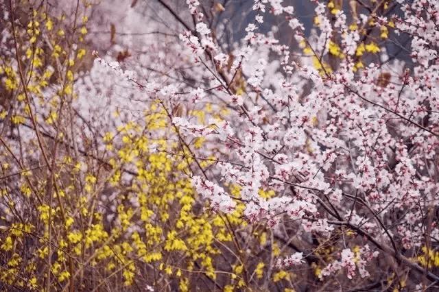 新乡南太行|没有一个冬天不可逾越, 没有一个春天不可到来。