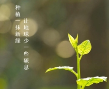 植树节|春风十里拂太行,正是植树好时节!