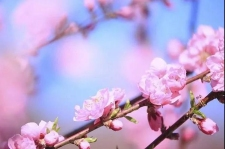 新乡南太行|我有桃花满山,何愁春风不至?