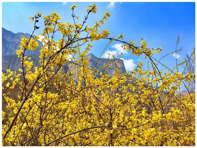 春暖花开,如约而至!新乡南太行关山景区恢复开园!