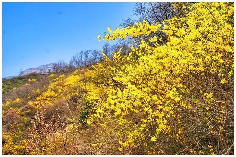 新乡南太行|花开竞争春,君闻不思归。