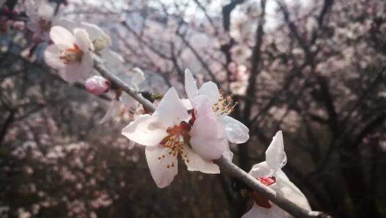新乡南太行春季赏花福利大放送,赶紧约起来吧!