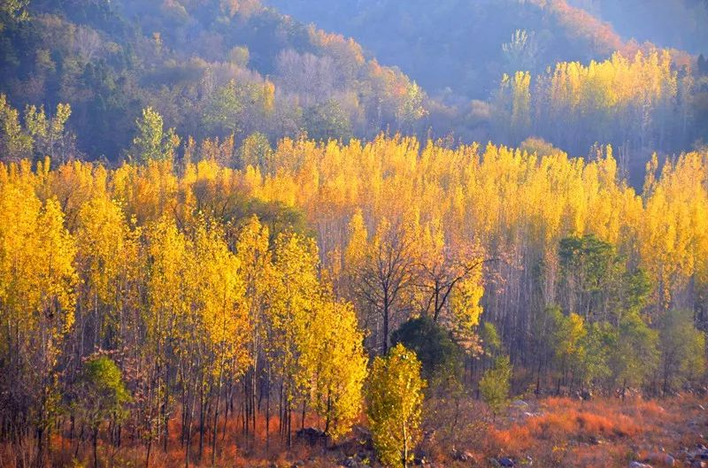 新乡南太行的唯美秋景正在绽放,你还不来吗?