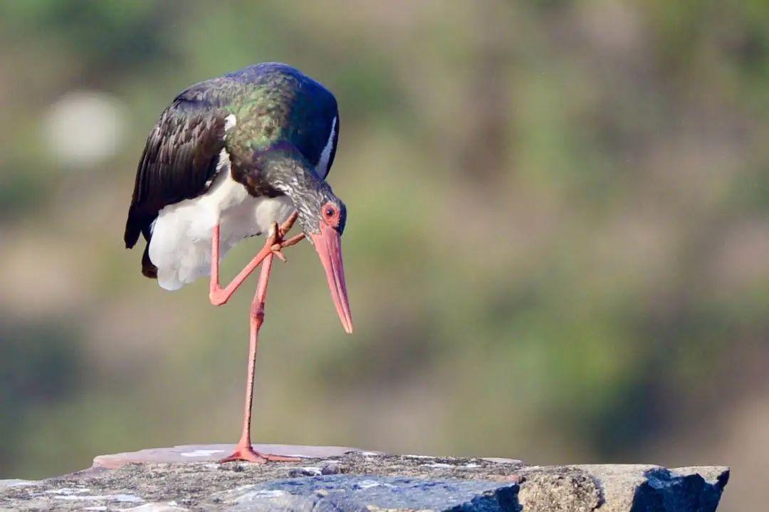 世界濒危物种惊现新乡南太行八里沟景区