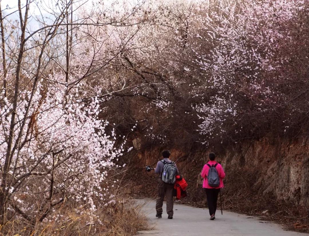 【3月女神福利】女士免门票!男士门票半价!漫漫山桃林等你来拥抱春天~