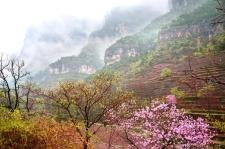 新乡南太行|春雨滋生一抹绿,唤醒漫山桃花红!