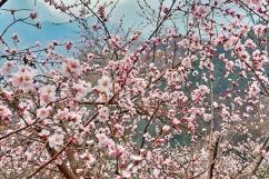 秋沟桃花节